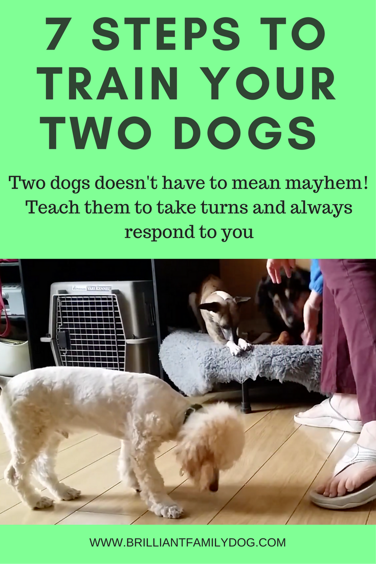 Two Dogs Twice As Nice Or Twice The Trouble Brilliant Family Dog Dog Training Tips Dog Training Easiest Dogs To Train