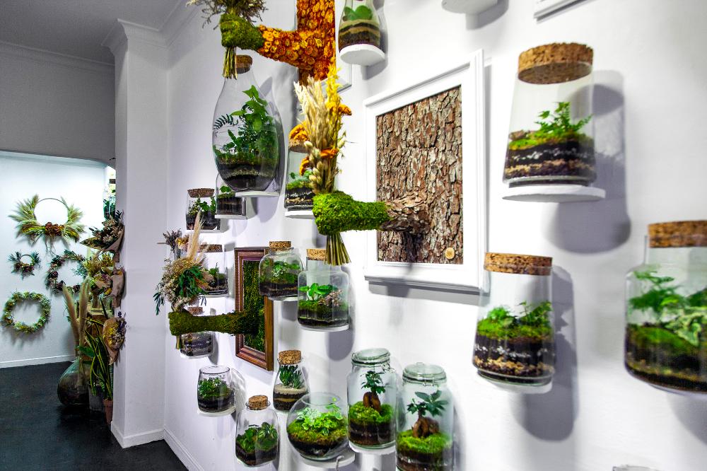 Installation Plants