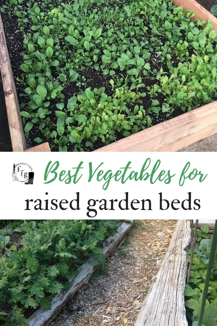 Best Vegetables To Grow In Raised Beds Growing 400 x 300