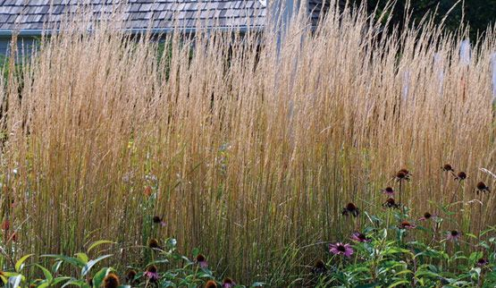 Designing With Grasses Finegardening Ornamental Grasses Fine Gardening Grasses Garden