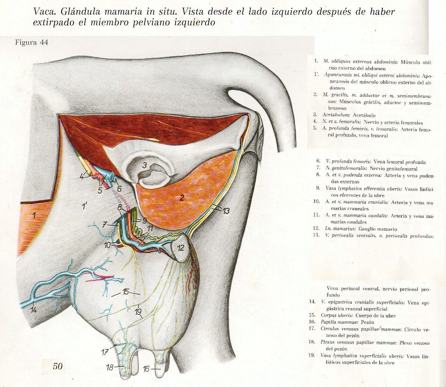 Pin de Luz Mery en ANIMALES | Pinterest | Anatomía, Anatomía animal ...