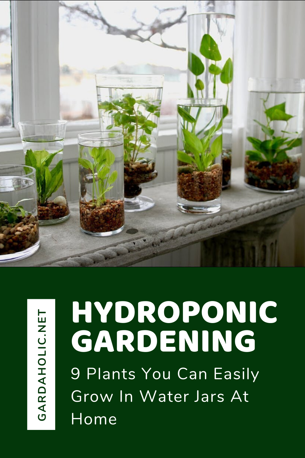 Hydroponic Gardening: 9 Plants You Can Easily Grow