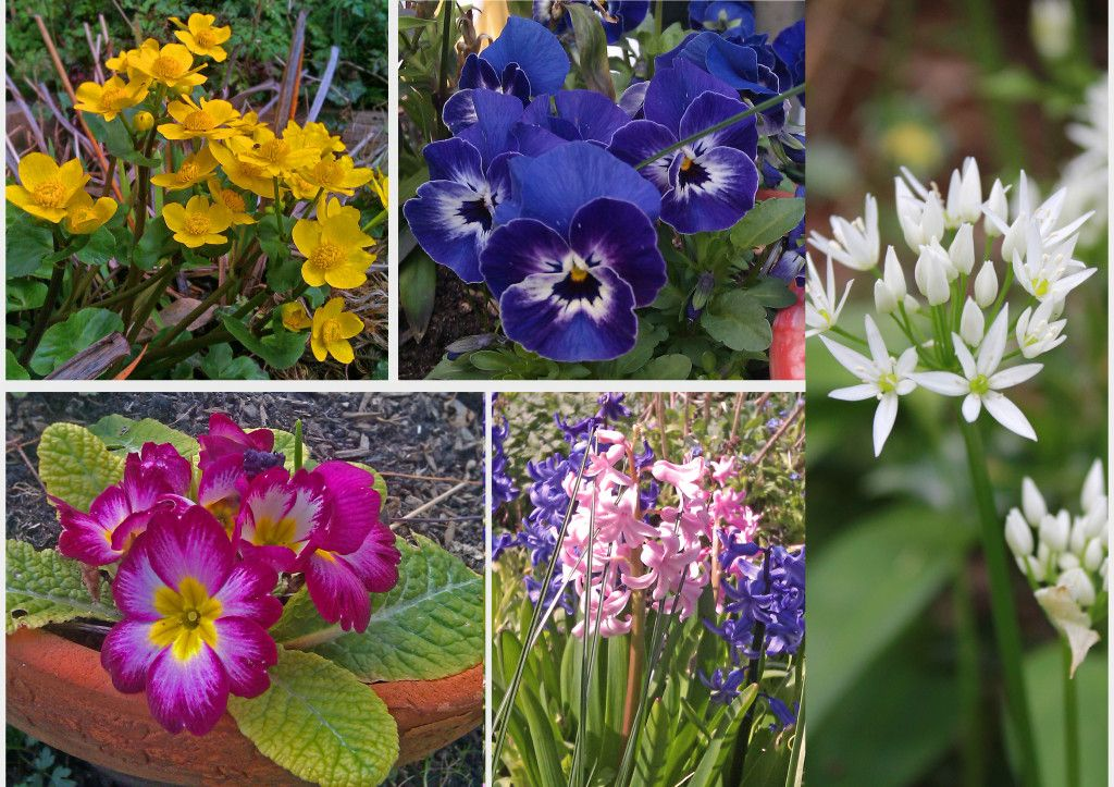 Spring Flowers England Garden And Plants Pinterest Plants