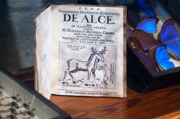 Real Gabinete Historia Natural - Permanente