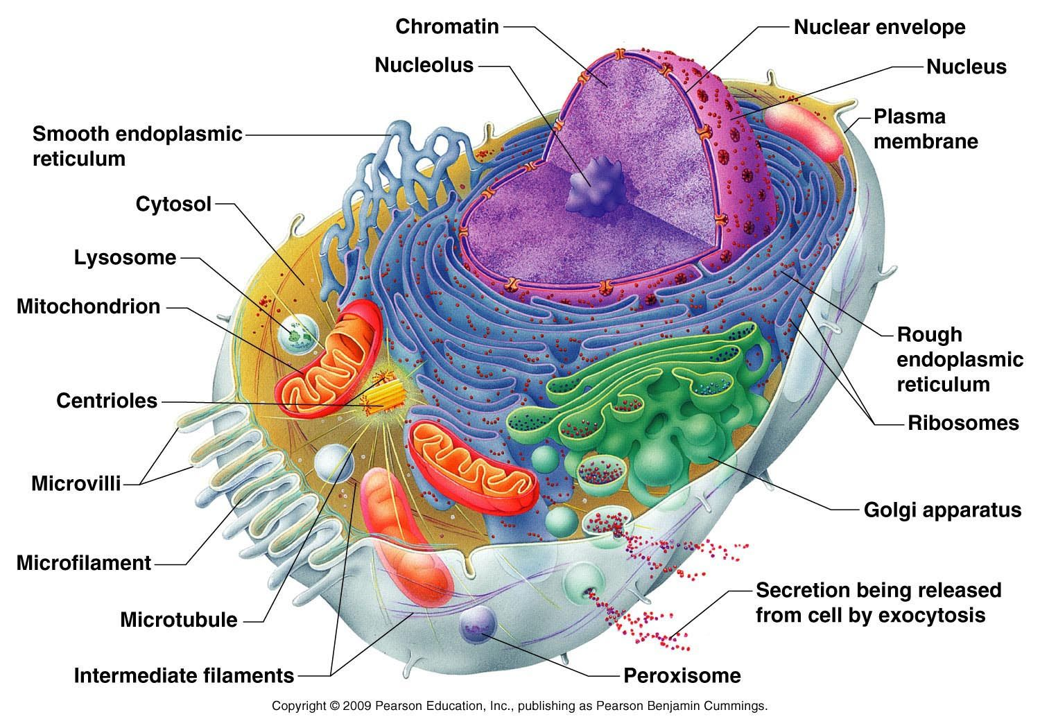 Biochemistry Lecture | Anatomy and Physio | Pinterest | Teas test ...