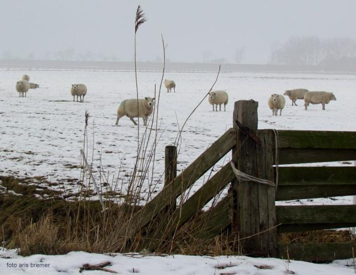 Verrassende Kinderkamer Paarden : Kortingsactie voor verrassend leuke wolproducten en meer! gear