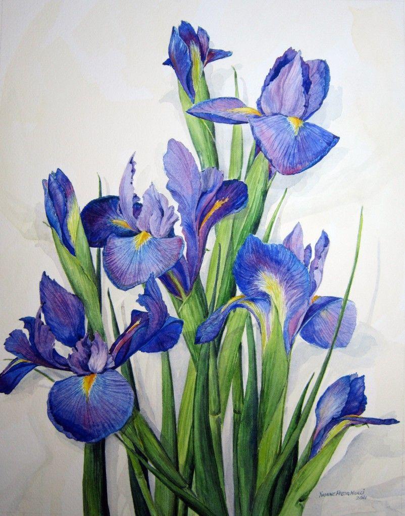 Purple Iris for Alicia Iris painting, Flower art, Iris