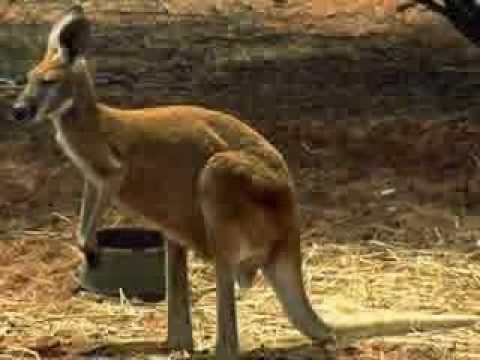 Remember this song? Rolf Harris - Tie Me Kangaroo Down Sport, 1957