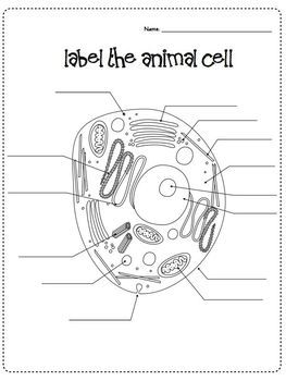 cells & microscope activity unit   sciene grade 5   plant cell diagram,  animal cell, plant cell