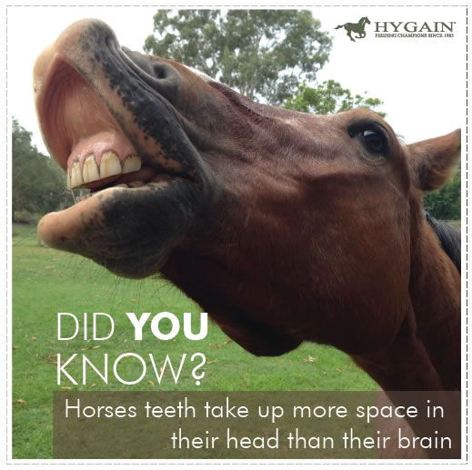 The Horse Has A Far Smaller Ratio Of Brain Size To Body Size Than