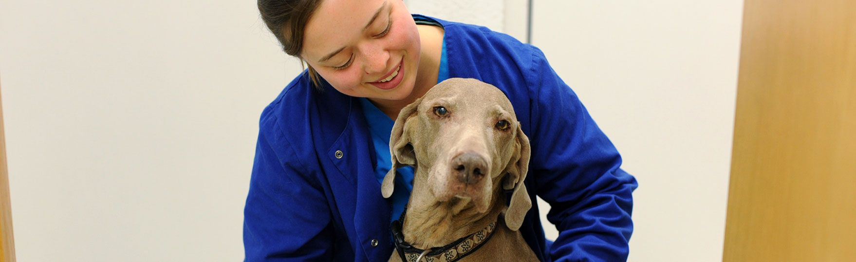 Mobile Vet service offers the best possible Veterinary