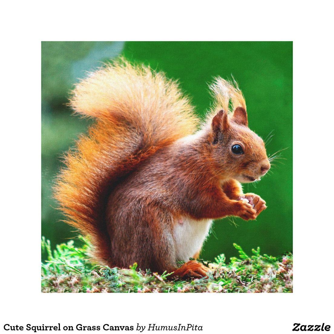 Cute Squirrel on Grass Canvas