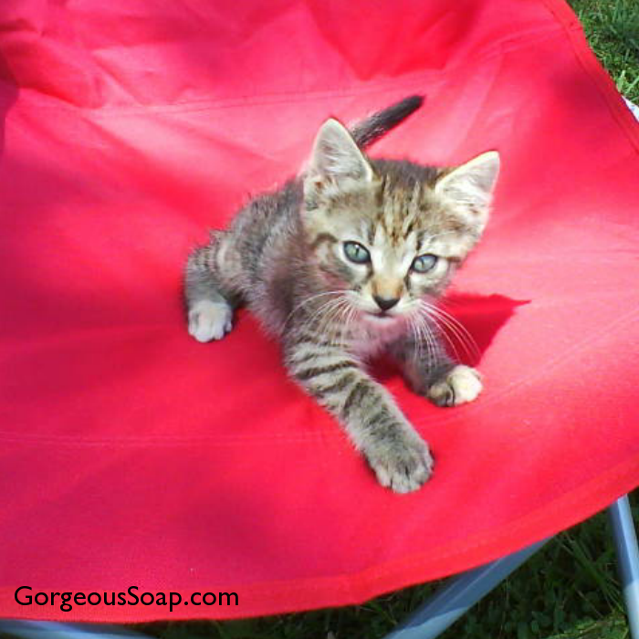 Throwback Thursday from the farm. One of our first kittens