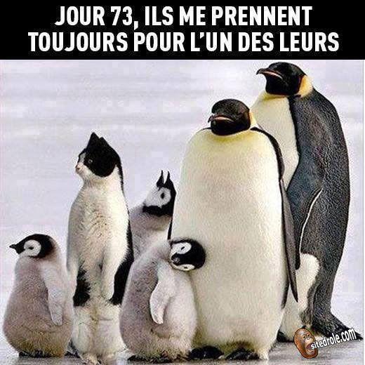 Un Des Leurs Image Drole Animaux Pingouin Drole Image Drole Animaux Humour Bebe