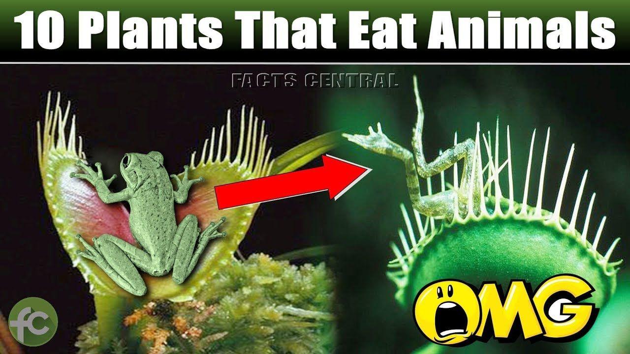 10 Plants That Eat Animals / Carnivorous Plants / Flesh