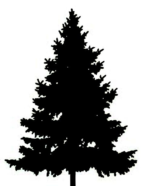 Best Pine Tree Clipart 24529