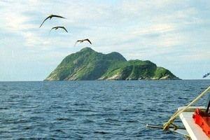 Snake Island - Ilha de Queimada Grande, Brazil