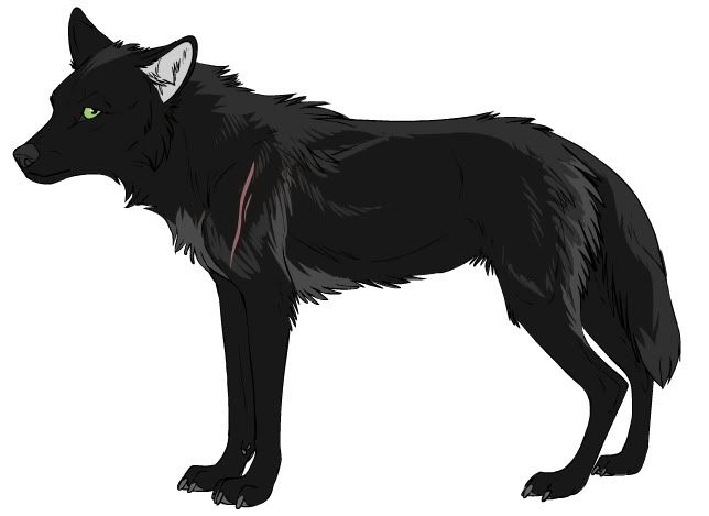 anime wolf anime wolf not mine pictures images and photos