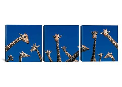 Curious Giraffes concept Kenya Africa By Panoramic Images Canvas Print #PIM2727