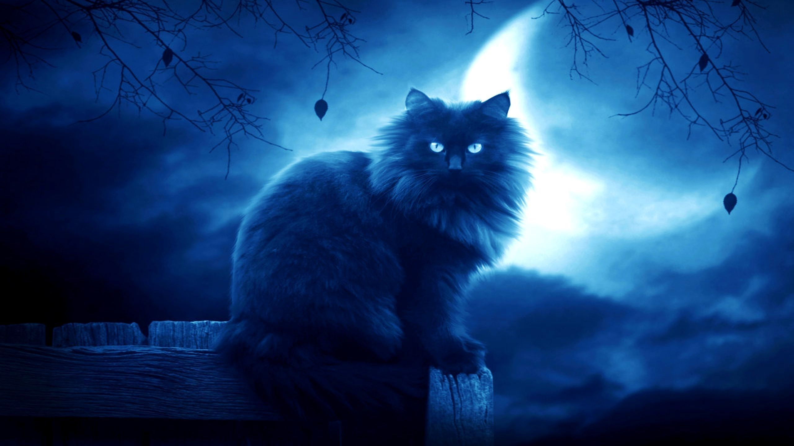 Cat wallpapers hd free download d wallpapers pinterest