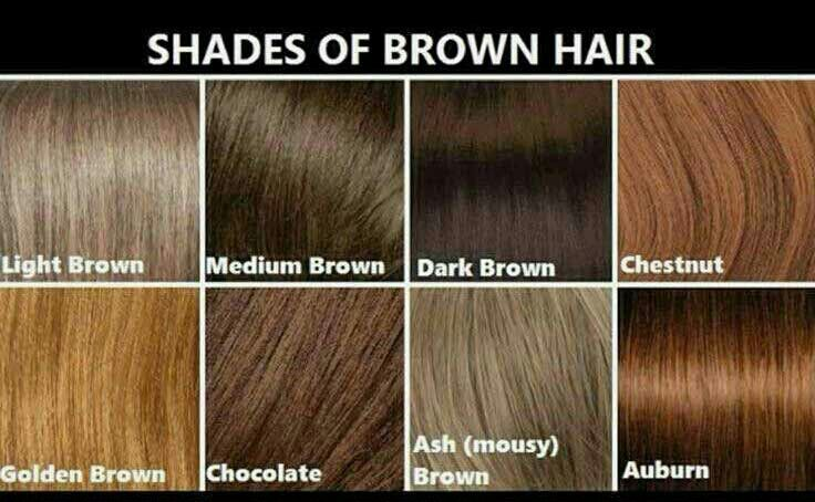 Brown Hair Chart Chestnut Golden Light Dark
