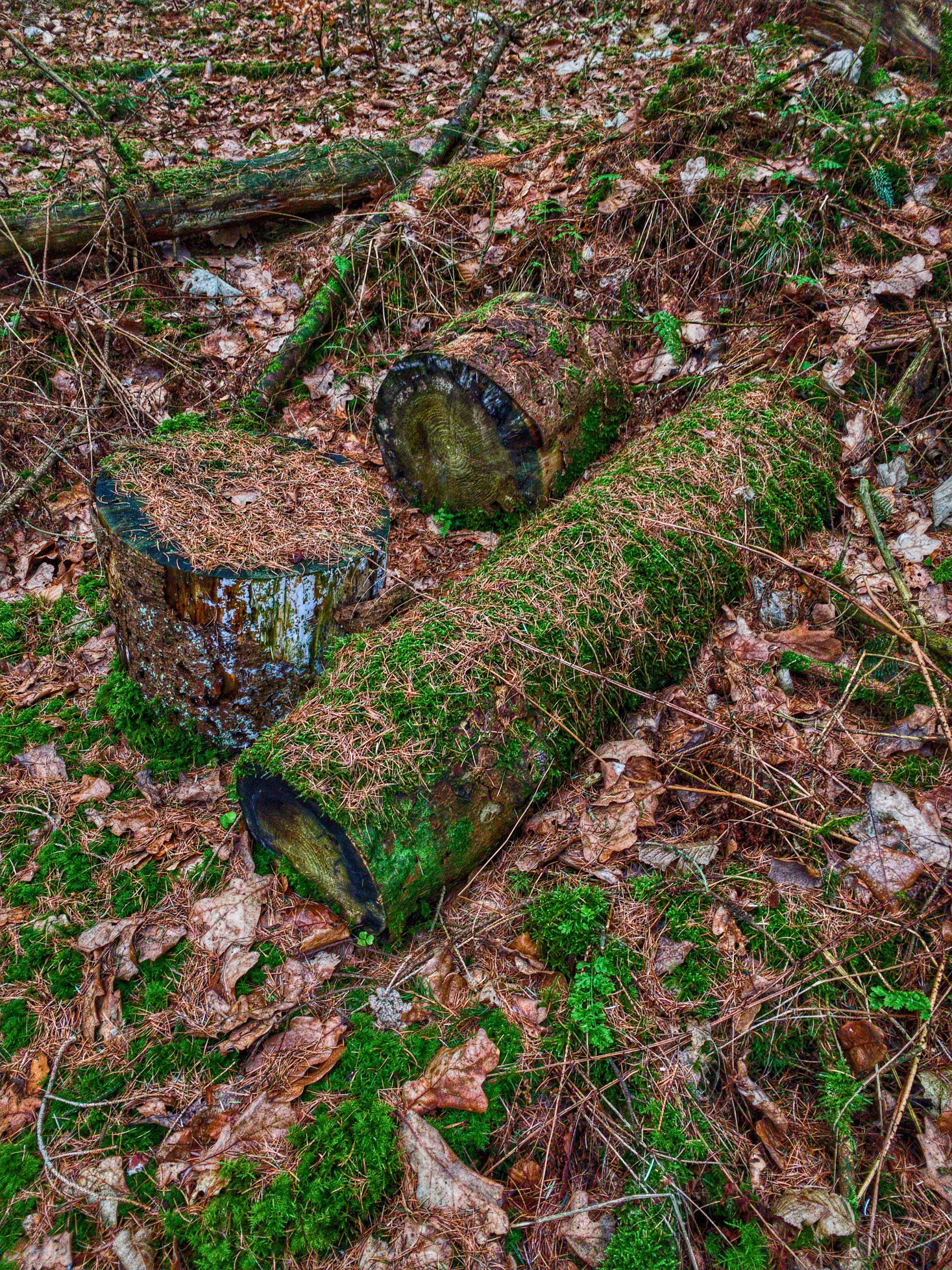 Forest floor lillering skov denmark with images