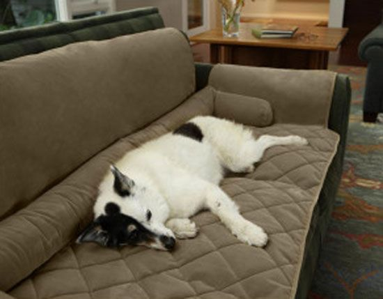 Beautiful Dog · Couch Saver: ...