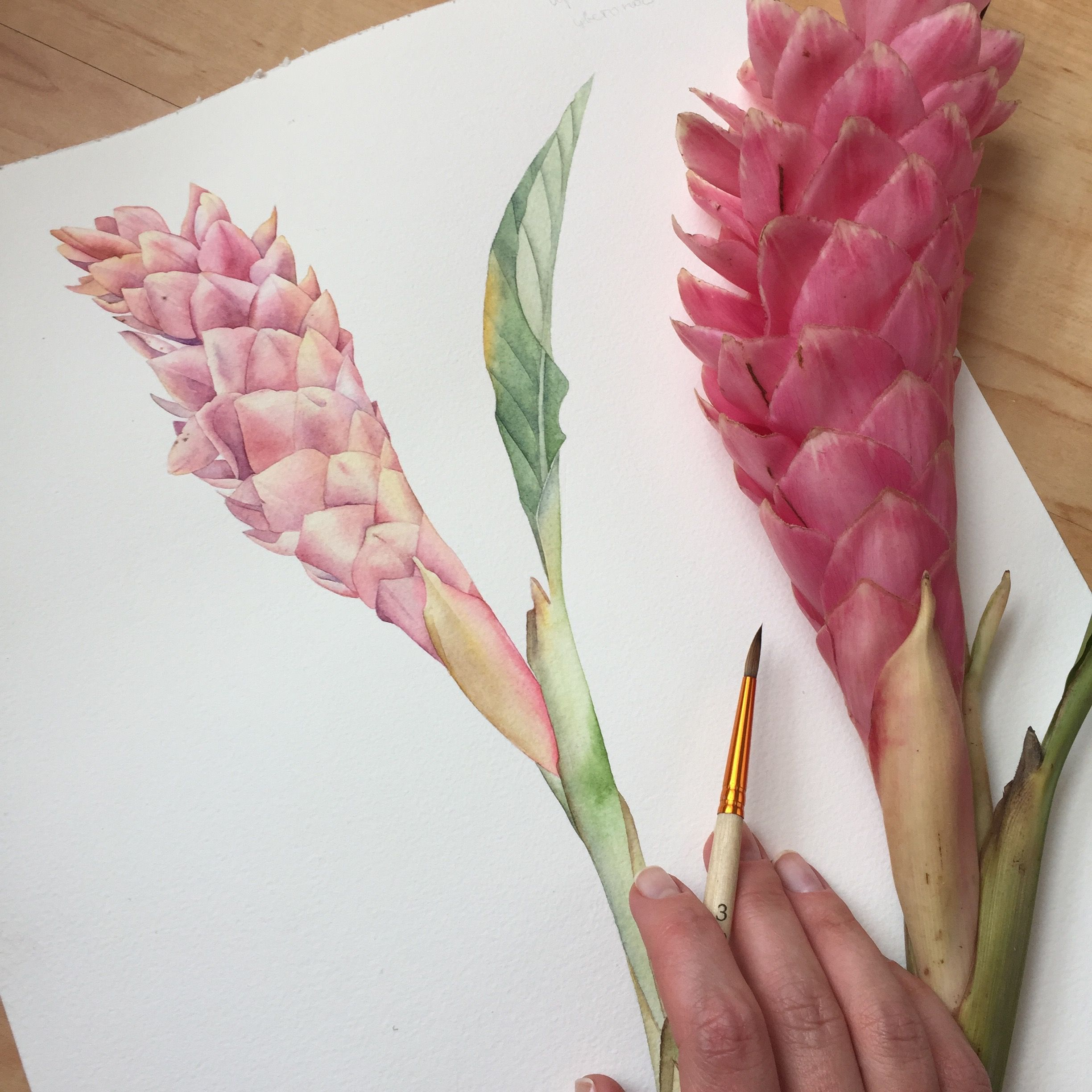 Pin By Laura Minota On Watercolour Flower Illustration Ginger Flower Watercolor Illustration