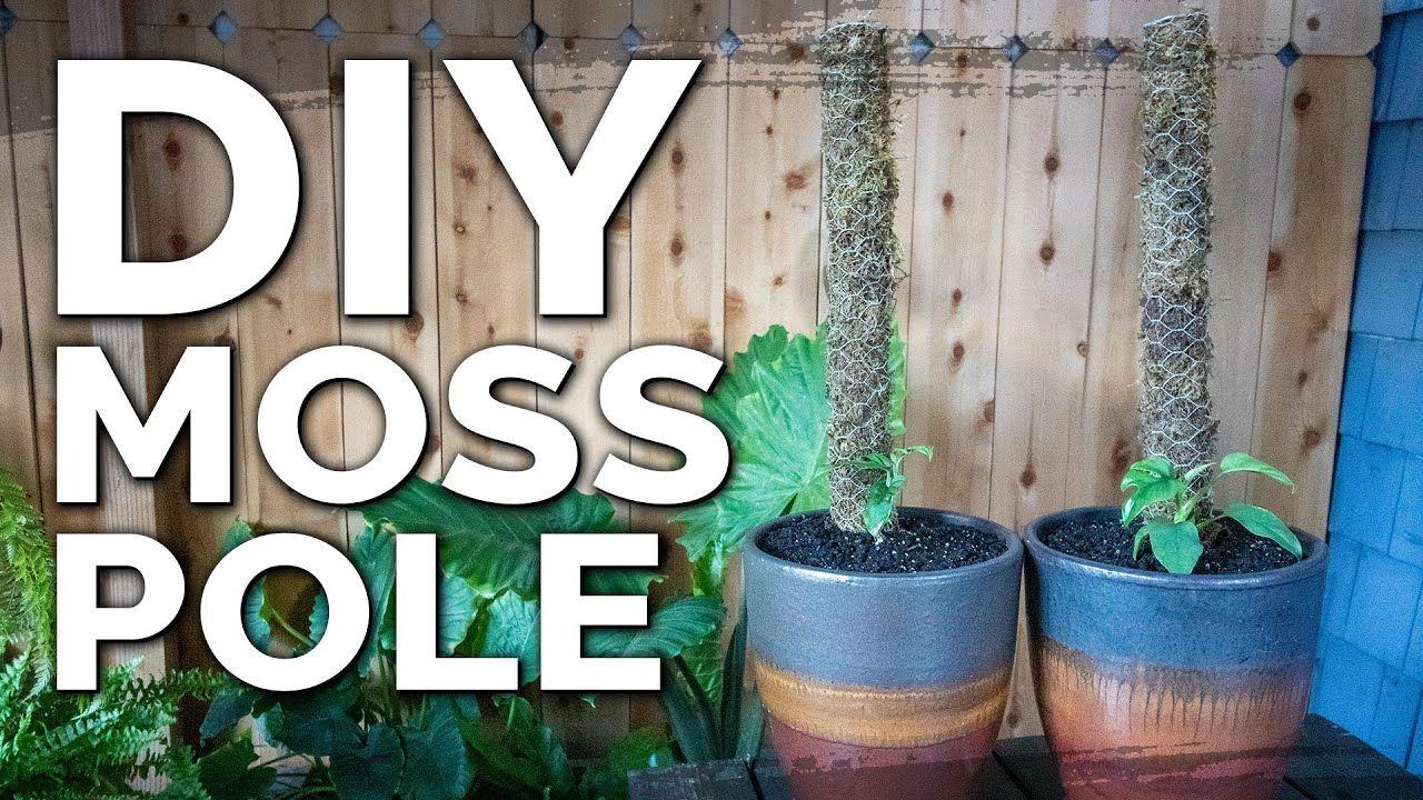 diy moss pole for climbing plants
