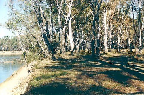 Camping at Horseshoe Bend near Cobram VIC Camping