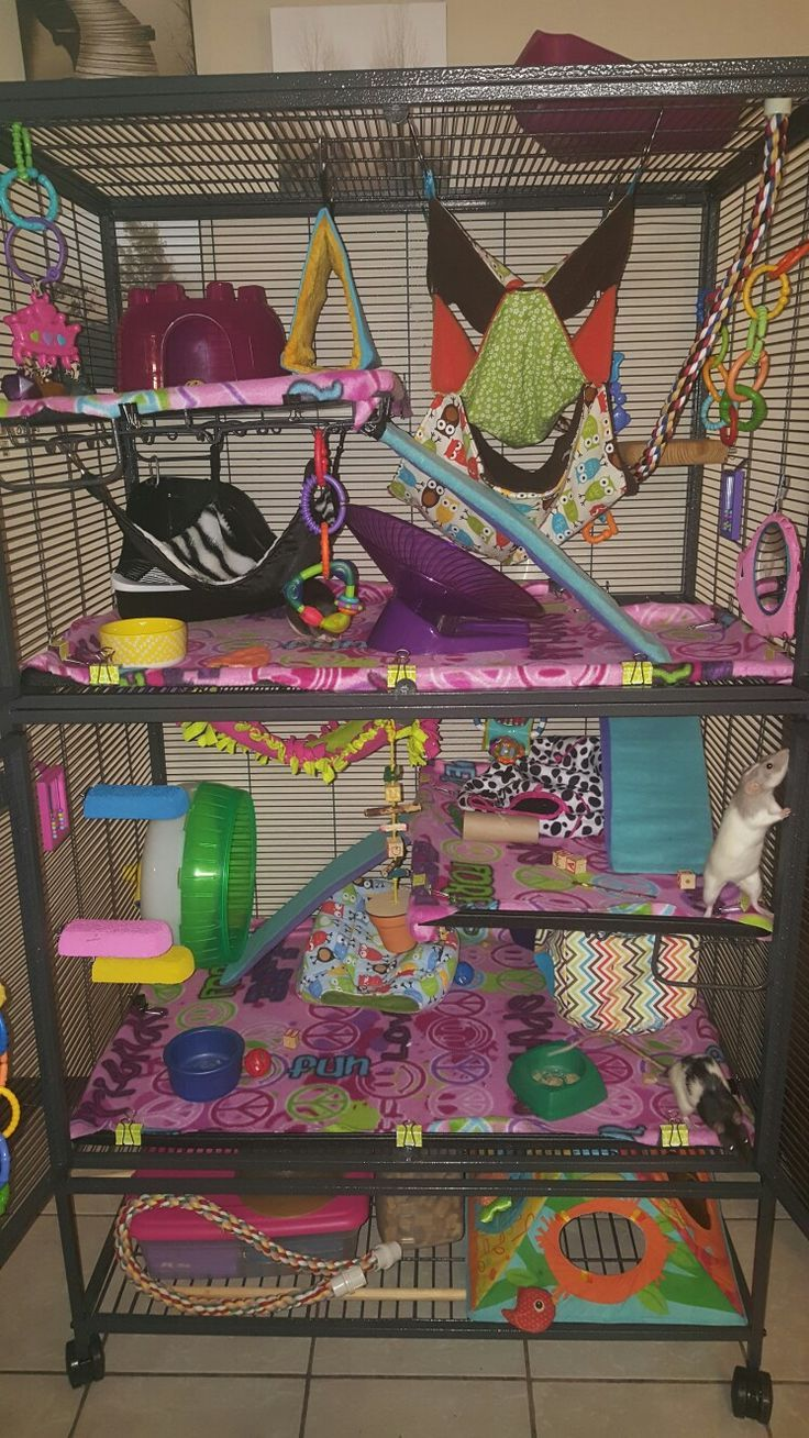 Critter nation cage pet rat cages critter nation cage
