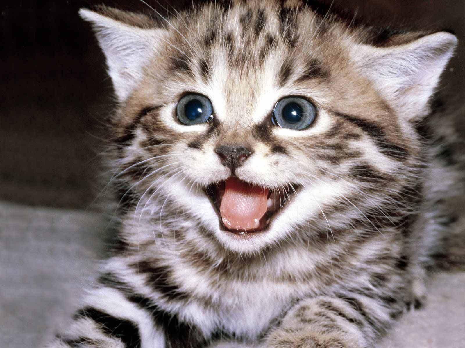 How Do I Look Like P Innocent Beautiful Kittens Smile Loveit Kittens Cutest Funny Cat Wallpaper Happy Kitten
