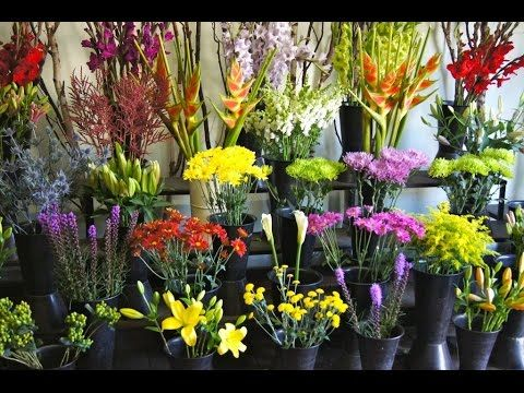 Flowers Wholesale Flowers Wholesale Nj Flowers Wholesale Nj