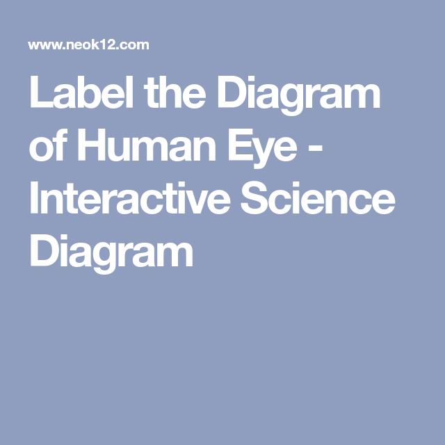 Label The Diagram Of Human Eye