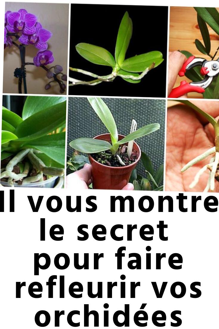 Comment S Occuper D Un Orchidée les orchidées sont une des plus belles plantes pour votre