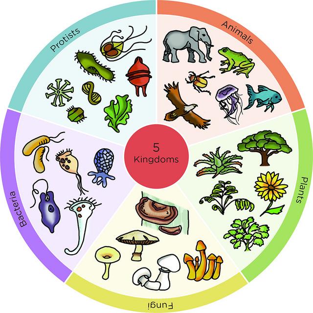 Biogeosfera Actividad Cuaderno De Los Cinco Reinos Caracteristicas De Los Animales Clasificacion De Seres Vivos Actividad De Clasificación De Animales