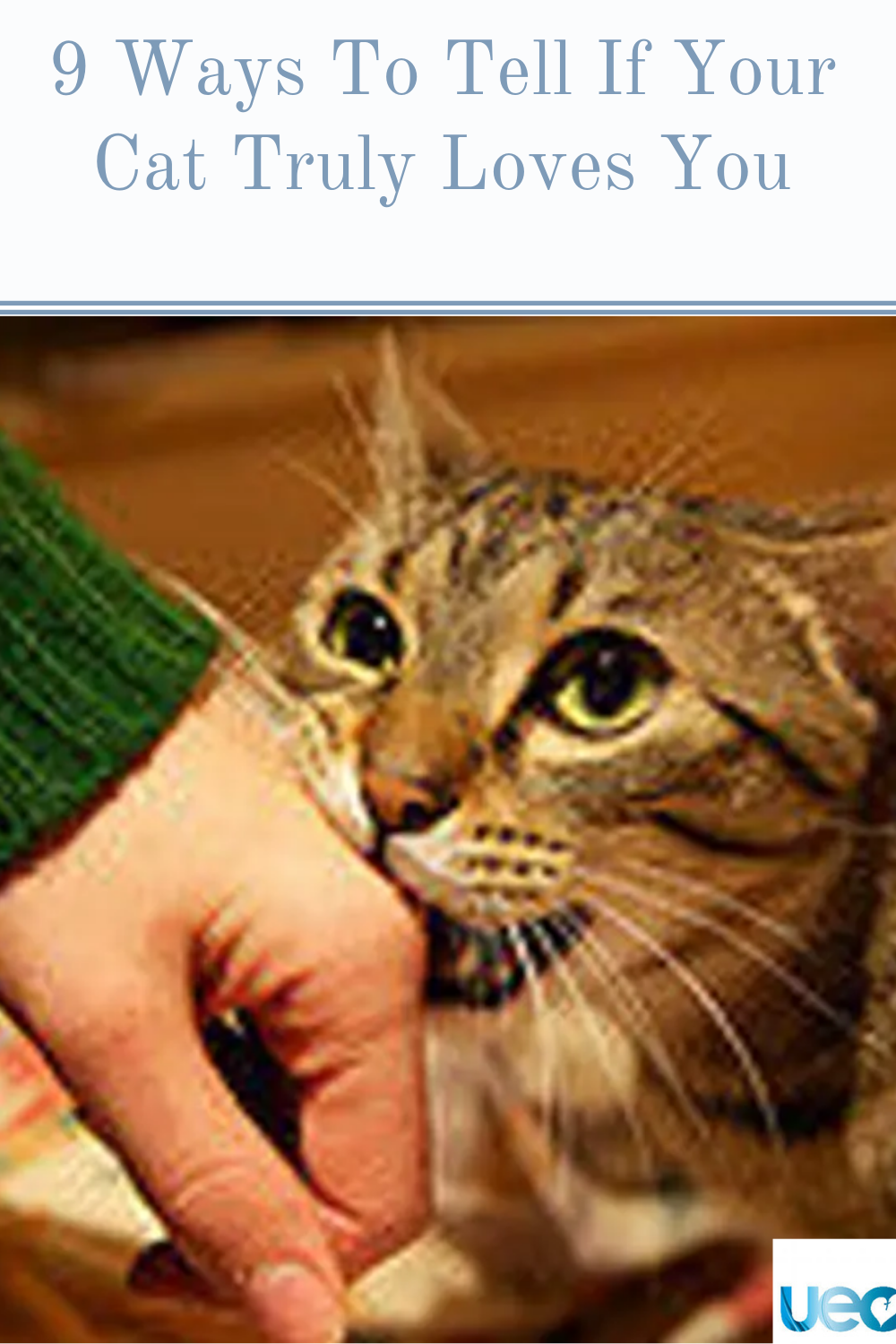9 Ways To Tell If Your Cat Truly Loves You In 2020 Cats Cat Love Love You