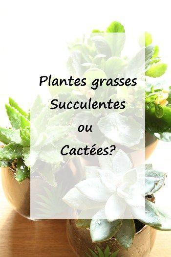 Quelle Difference Entre Plantes Grasses Succulentes Et Cactees