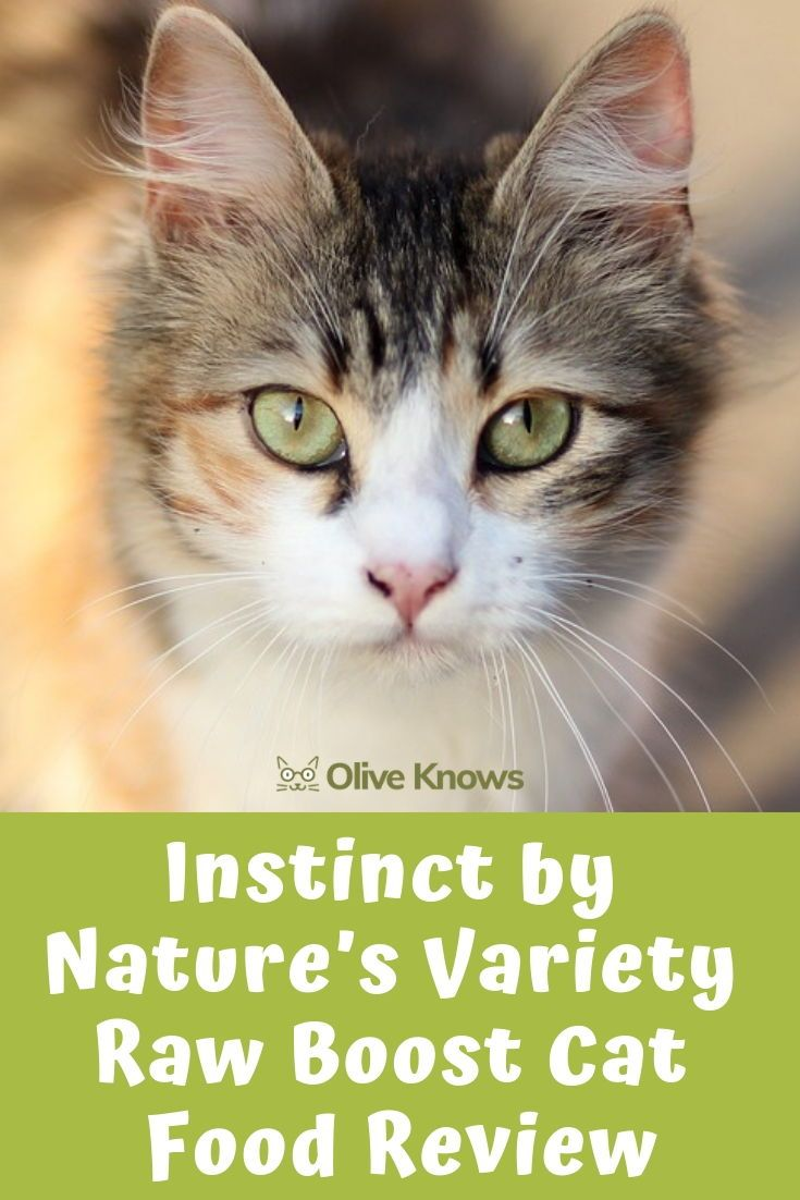Instinct by natures variety raw boost cat food review