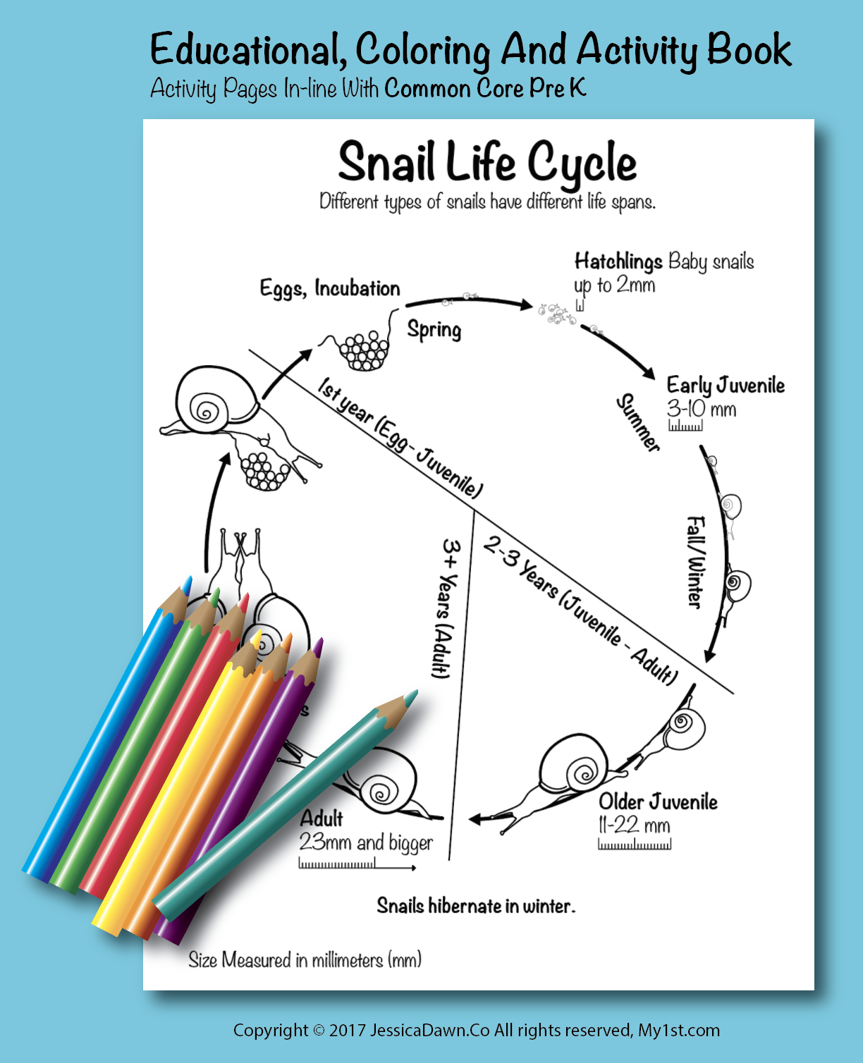 Snail Life Cycle My1st Coloring Page Fun And Educational