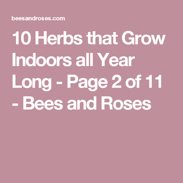 10 Herbs that Grow Indoors all Year Long - Page 2 of 11 - Bees and Roses