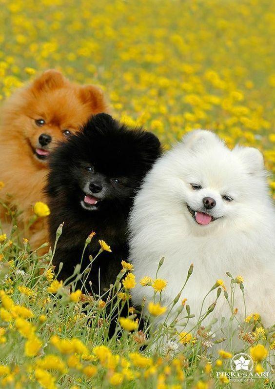 süßer und süßer Hund