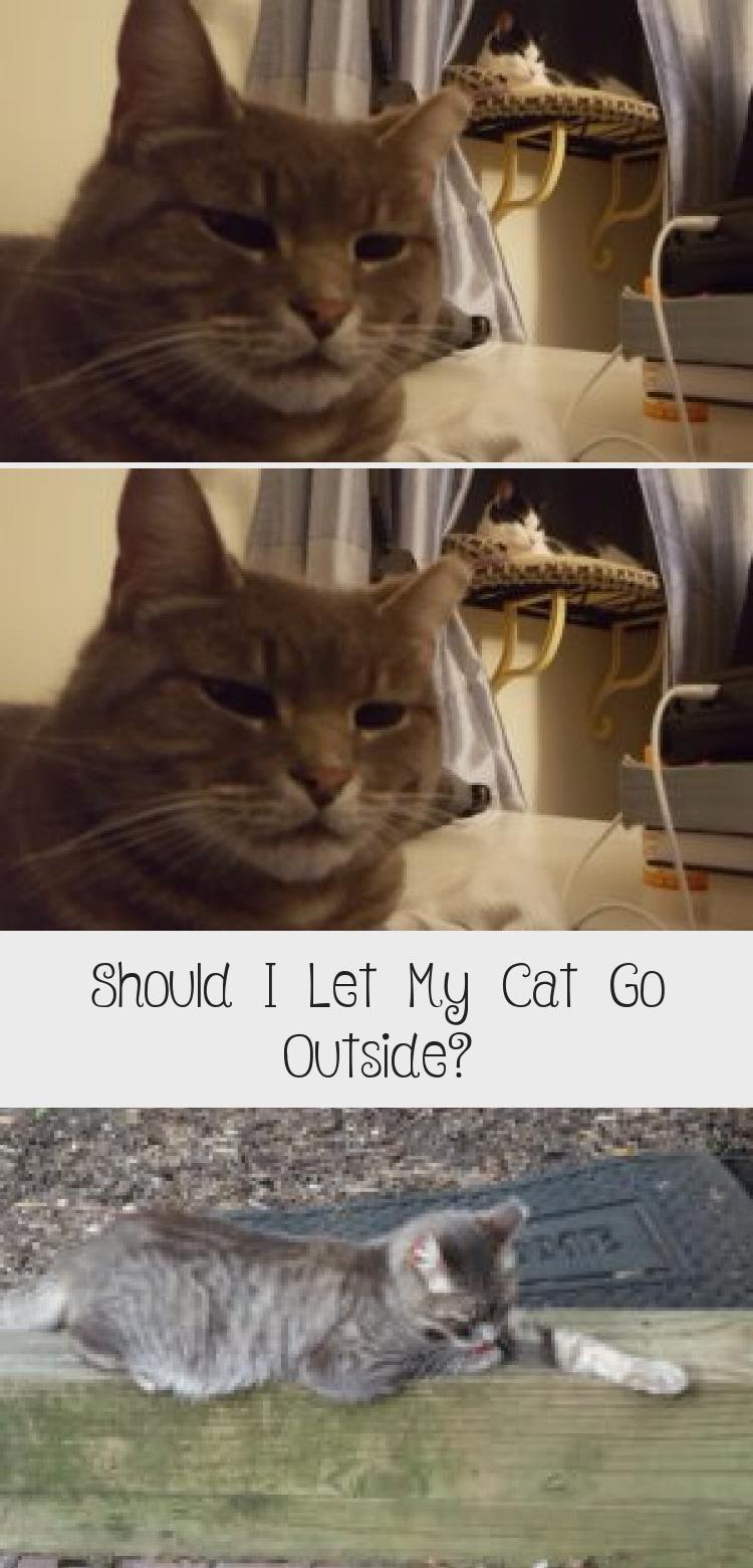 My Blog En Blog Cat Playground Cats Indoor Cat