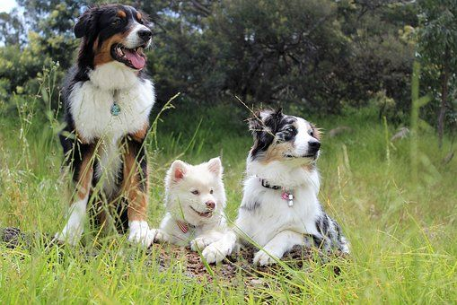 Check Out These Simple Dog Training Ideas Dogs Lyme Disease In