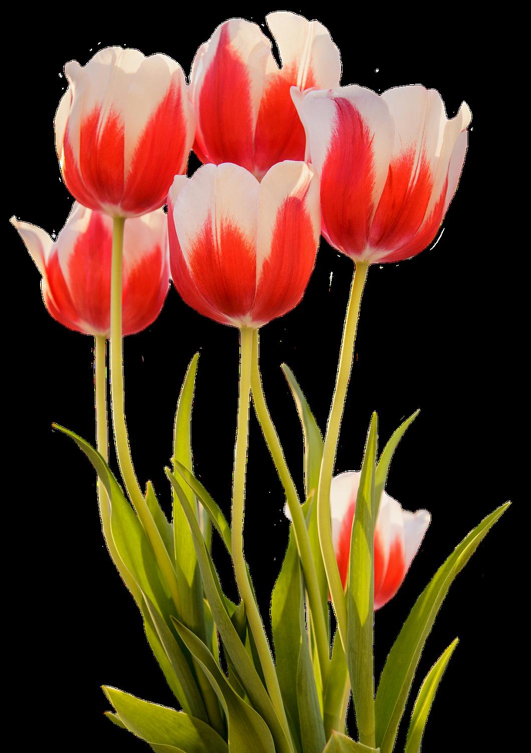 Pin By Regina Prevelato On Flores Spring Garden Flowers Spring Flowers Tulips