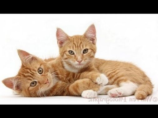 Baby Cats And Kittens Meowing Playing Video Colecciones