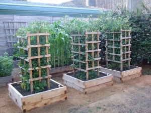 Wooden Tomato Cages This Version Is A Lot More Successful But