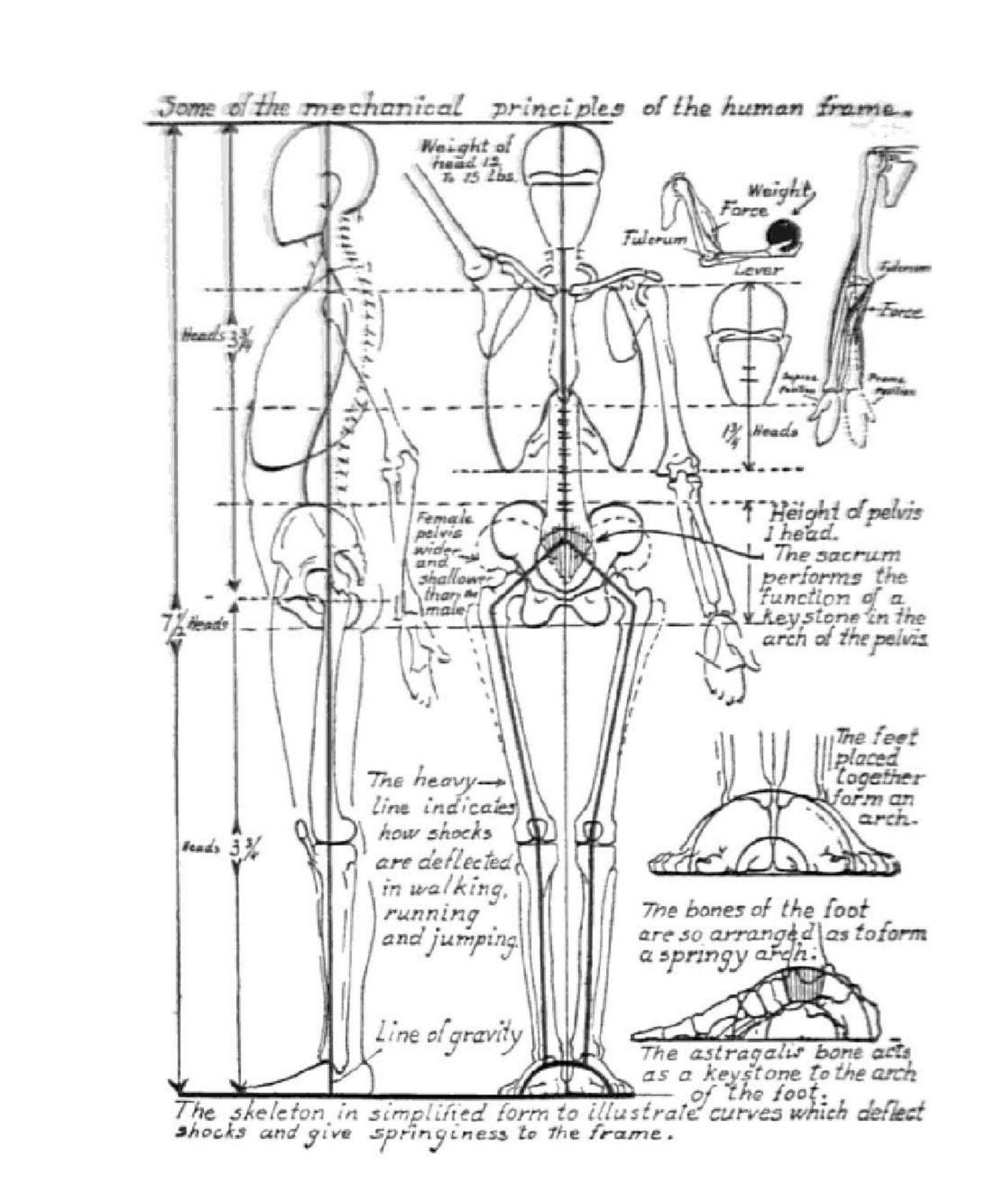 Pin by ArtStuff . on AnatoRef - Art Anatomy & Reference | Pinterest ...