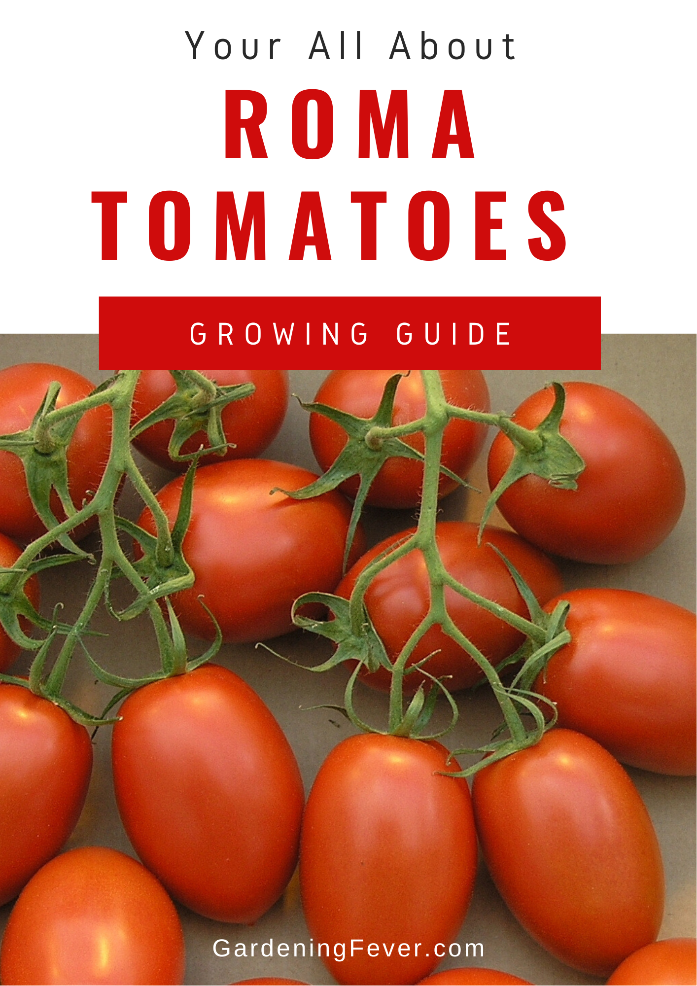Your All About Roma Tomatoes Guide In 2020 Winter Vegetables Gardening Tomato Growing Organic Vegetables