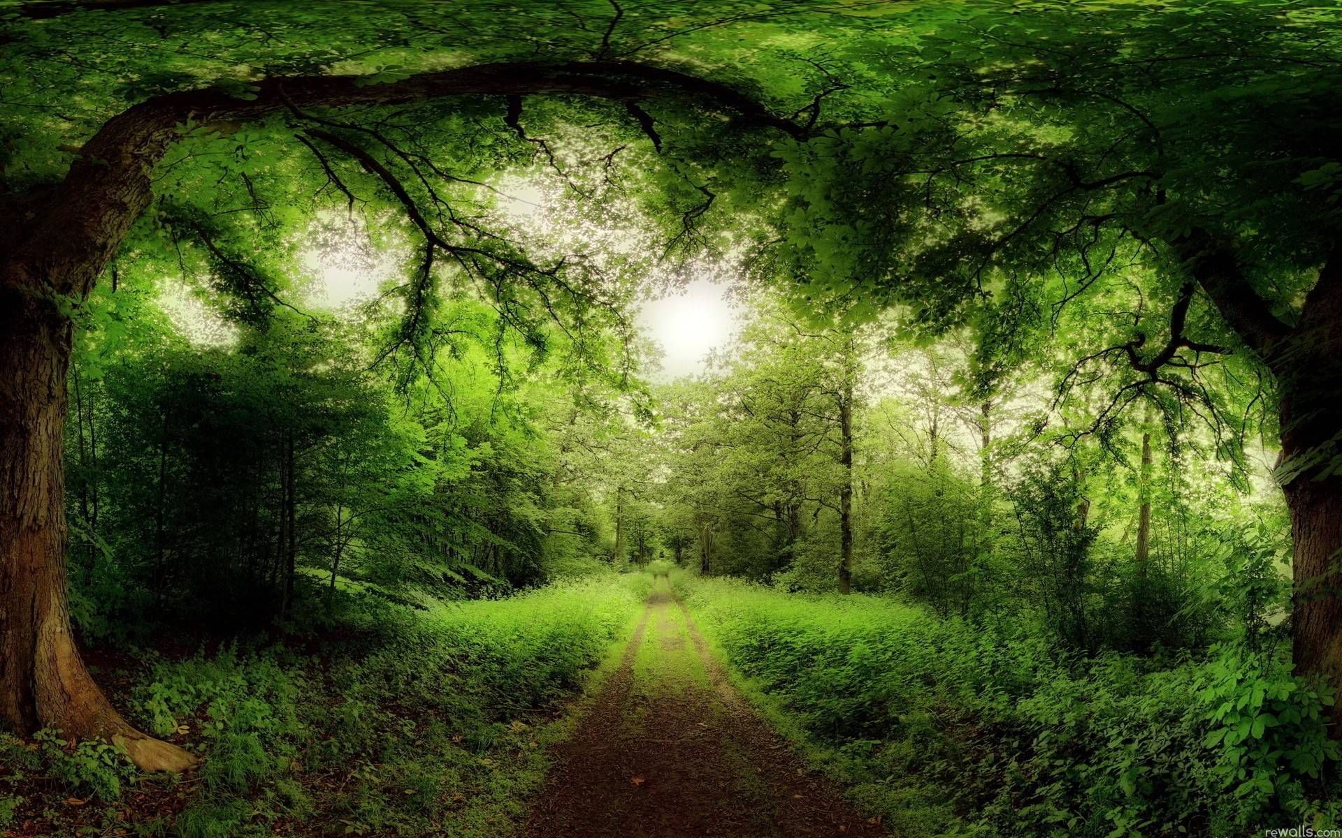 Forest Wallpapers Beautiful Nature Wallpaper Forest Road Green Landscape